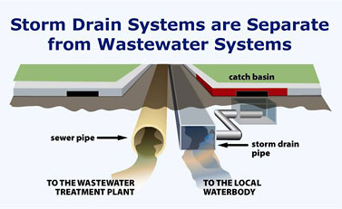Storm drain systems are separate from wastewater systems